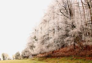 Then in early December winter cold returned, briefly, leaving spectacular whispers of hoar frost on trees high on the ridge.  Before it warmed up again to give us a Grey Christmas.