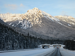 One of the wildlife corridor bridges over the Trans Canada Highway