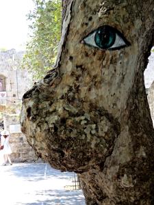Eyeing a plane tree