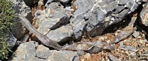 Sloughed snake skin