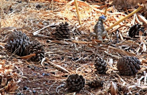 While I was sitting under a shade tree Liz came out among the pine cones