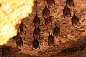 Bat colony: taken without flash so as not to disturb them