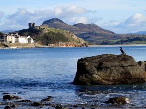 Cormorant and Criccieth