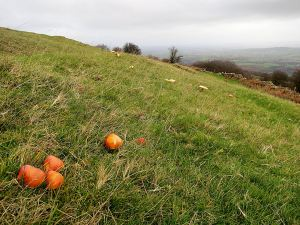 On the better soils on the ridge, the grass is green and  fungi add colour