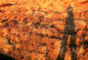 Photography on fiery red grass