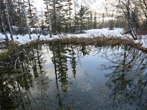 A hot spring feeds this pool, a rare wildlife habitat