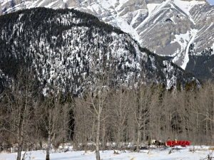 Horse-drawn sleigh offers rides to visitors