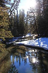 Reflective, placid water in the creek as the early winter ice melts