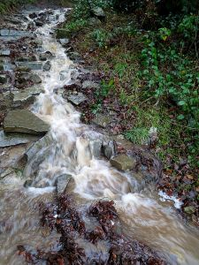 A miniature waterfall, once a path