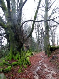 In the grey conditions even the moss looks vivid