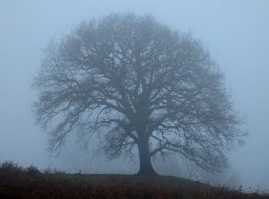 Lost in the cloud, a lone tree at about 250 metres