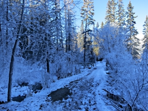 In deep shade, the trail enters a frozen world.