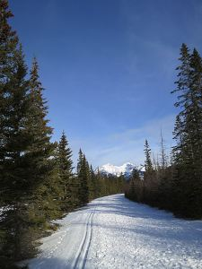 I had left the twin cross-country ski grooves on the back-trail from Banff towards Sunshine Village