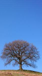 On the ridge, trees still in tight bud