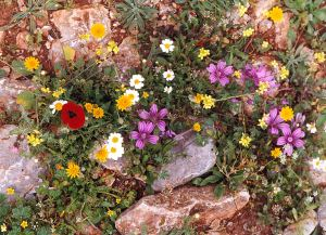 A wide variety of flowering plants
