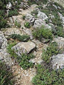Rocky path and sage