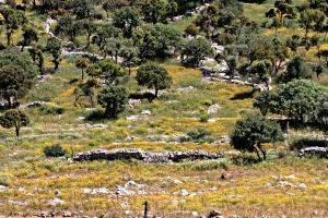 From the path to the monastery of Panagia Myrtidiotisa looking across the rich soils in the col at Ksissos