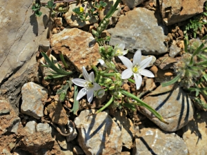Small and delicate in the middle of the stony path, unknown to me