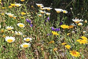 Random clusters of flowers brighten even scruffy bits of path