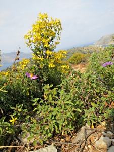 natural rock garden