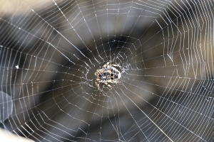 At the centre of its web