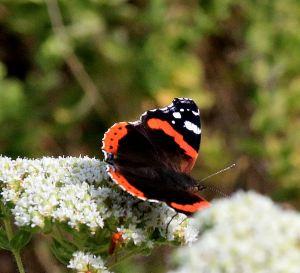 .... flexing its wings