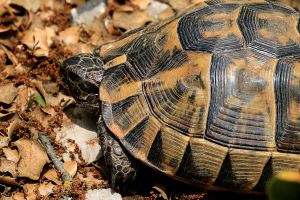 One of the larger tortoises seen on the walk