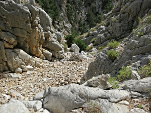 In places the riverbed is like a broad path