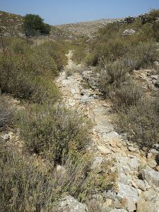 The gorge begins as a dry stream bed through the oregano