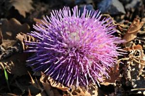 Vivid purple among the dead leaves