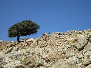 A lone cypress tree skylined on a barren rocky mountainside