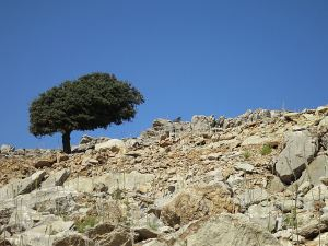 A lone cypress tree skylined on a barren rocky mountainside