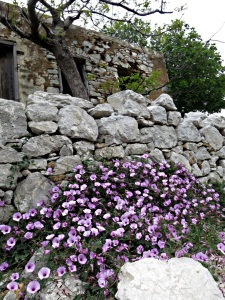 ..... with a magnificent clump of convolvulus outside