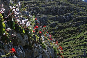 Crown of cyclamen and poppies lights up the top of the Drakos Fortifications