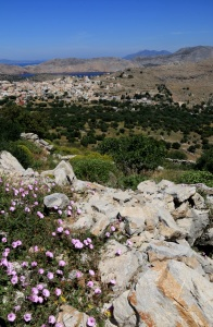 Looking across Vipers Grass, convolvulus to the Pedi Valley, windmills above Horio .... and turkey beyond