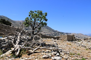 One remaining at the top of arid terraced fields within the stone enclosures