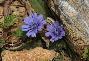 Growing out of small gaps between rocks, each flower about 5-10 cms across, but again no idea what they are called